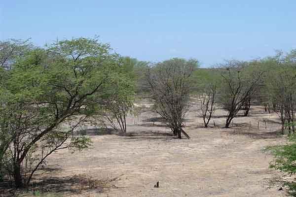 Scrub: características, relevo, flora, clima, fauna, exemplos 1