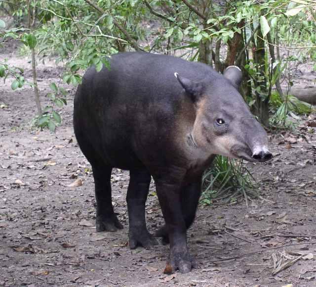 50 animais em perigo de extinção no México [com imagens] 25