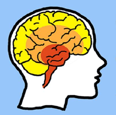 Cérebro reptiliano: teoria dos três cérebros 1