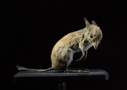 71 animais extintos em todo o mundo (e causas) 30