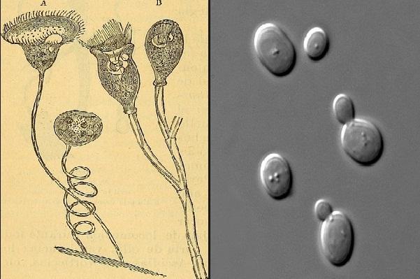 Circulação em fungos: nutrientes, substâncias, osmorregulação 1