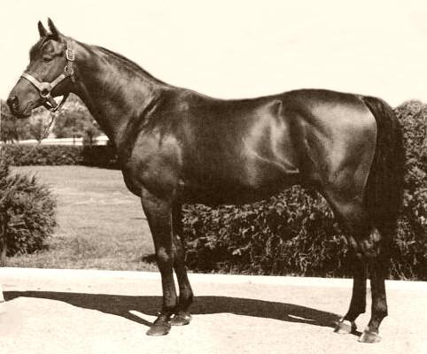 Os 30 cavalos mais famosos da história 8