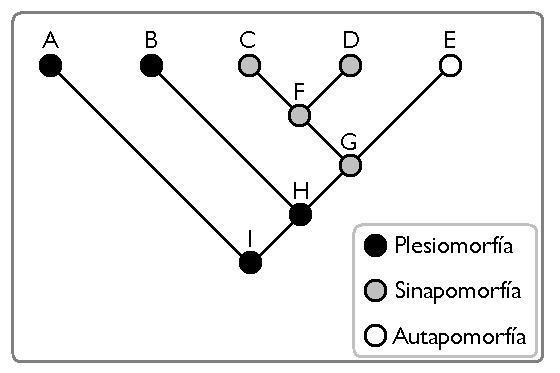 O que é uma apomorfia? (Com exemplos) 2
