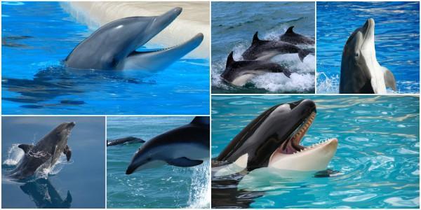 Golfinhos: características, evolução, habitat, reprodução 1