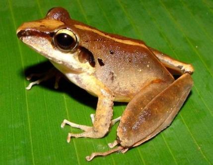 71 animais extintos em todo o mundo (e causas) 18