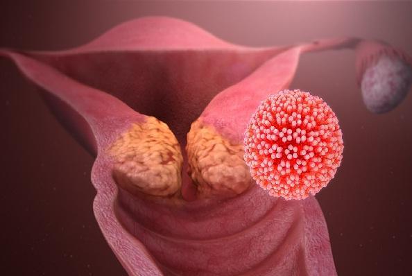 Papopavírus: características, taxonomia, morfologia, patologia 2