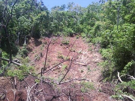 Desmatamento na Colômbia: agentes, causas e consequências 4