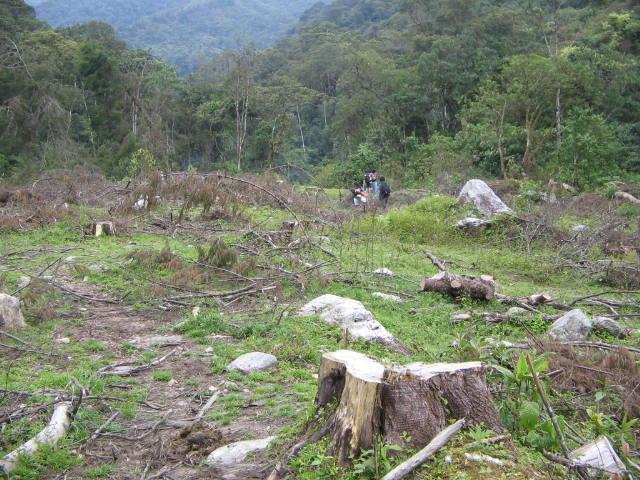 Desmatamento na Colômbia: agentes, causas e consequências 2