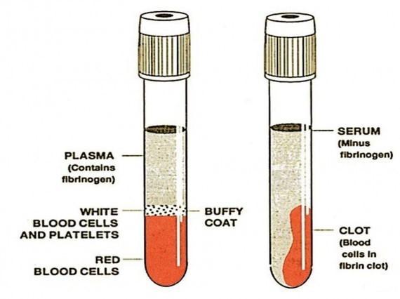 O que é soro sanguíneo? 3