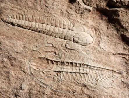 Importância dos fósseis: 5 razões fundamentais 1