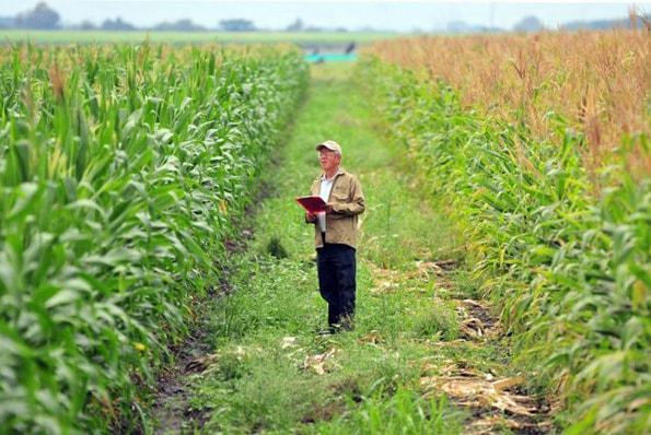 Empresas Agrícolas: Administração, Tipos, Exemplos 1
