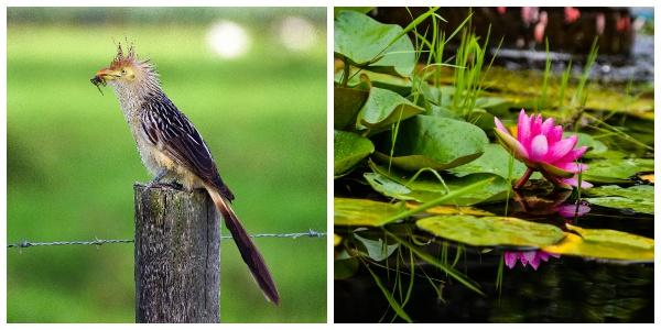 Flora e fauna de Entre Ríos: espécies representativas 1
