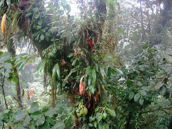 Os 4 biomas do Equador e suas características 2