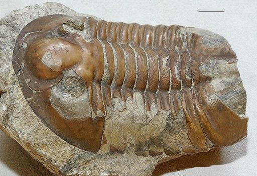 Paleobiologia: história, especialidades, descobertas 2