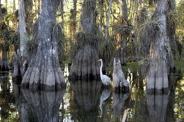Pantanal: características, relevo, flora, clima, fauna, exemplos 3