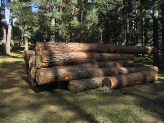 Exploração Florestal: Atividades, Tipos, Consequências 1
