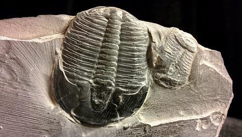 Cambriano: características, subdivisões, flora, fauna e clima 25