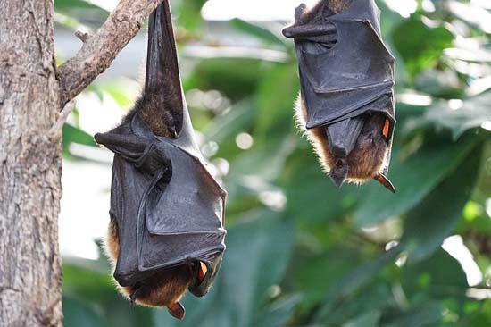 Flora e fauna do Equador: características e espécies 3
