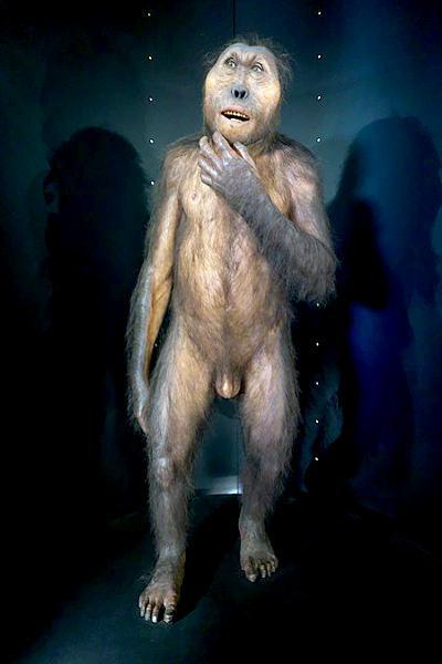 Paranthropus: descoberta, características, crânio 1