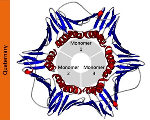 Estrutura quaternária de proteínas: características 1