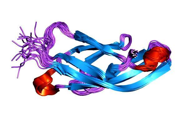 Caderinas: estrutura, características e funções 1