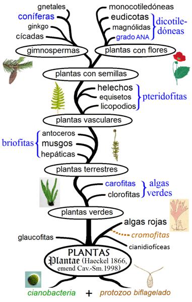Evolução das plantas: plantas de origem moderna 1