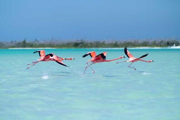 Flora e fauna de Yucatán: espécies mais representativas 2