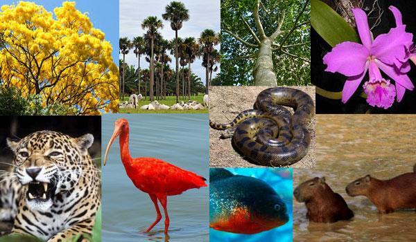 Flora e fauna da região de Orinoquía 1