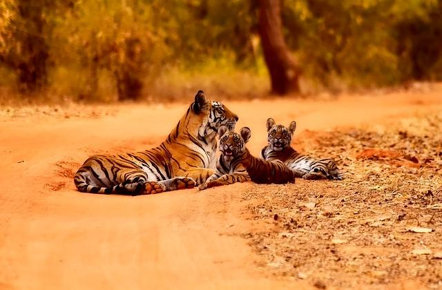 Flora e Fauna da Índia: Principais Características 1