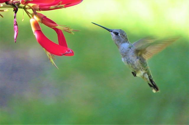 Flora e Fauna da Região Andina: Principais Características 1