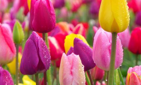 71 frases bonitas de maio 1