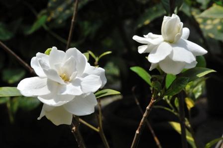 Campo Semântico das Flores: Destaques 1