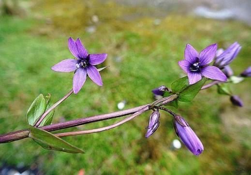 10 plantas endêmicas do Equador 2
