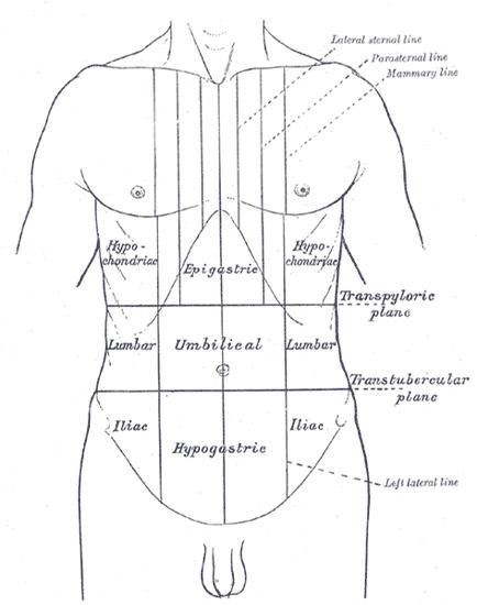 Ponto cístico: o que é, importância, anatomia da vesícula biliar 3