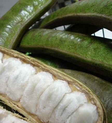 Os 10 frutos da costa equatoriana mais comum 5