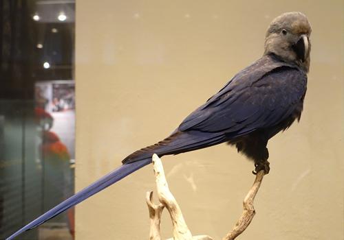 71 animais extintos em todo o mundo (e causas) 3