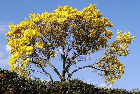 Flora de Tumbes: Destaques Recursos 1