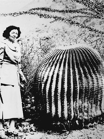 Helia Bravo Hollis: biografia, contribuições, descobertas 1