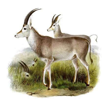 71 animais extintos em todo o mundo (e causas) 26