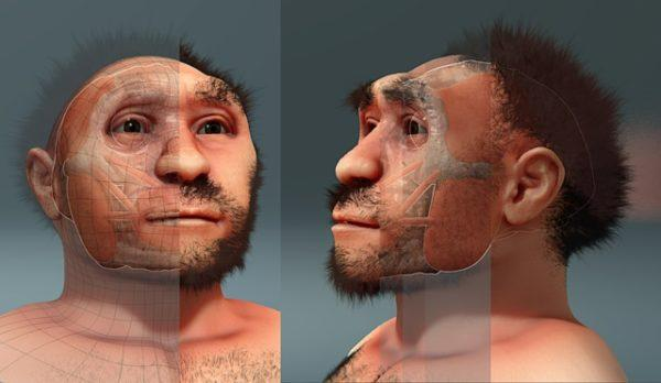 Homo erectus: origem, características, dieta, crânio