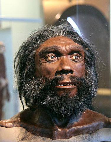 Homo Heidelbergensis: Descoberta, Características, Crânio 1
