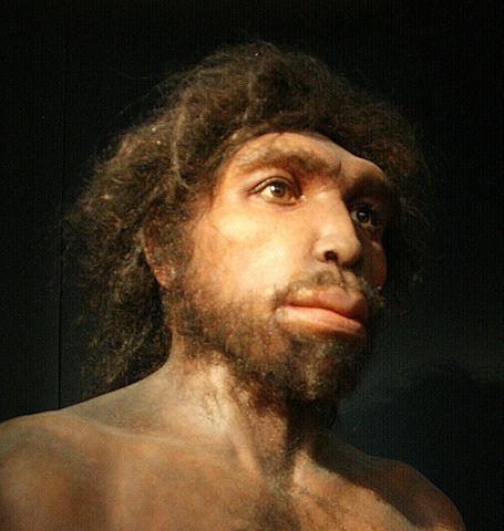 Homo Rhodesiensis: descoberta, características, crânio 1