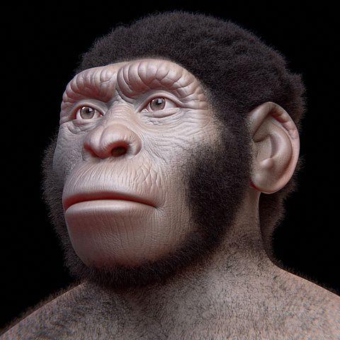 Homo Naledi: descobertas, características, crânio 1