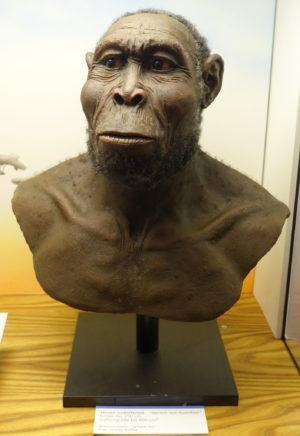 Homo Rudolfensis: Antiguidade, Características, Comida 1