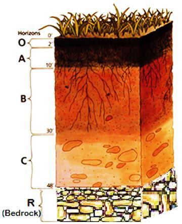 Horizontes do solo e suas características 1