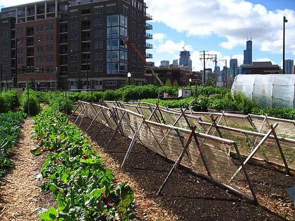Jardins urbanos: características, tipos, benefícios 4