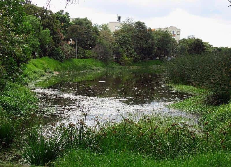 Zona úmida Juan Amarillo: história, características, flora e fauna 1