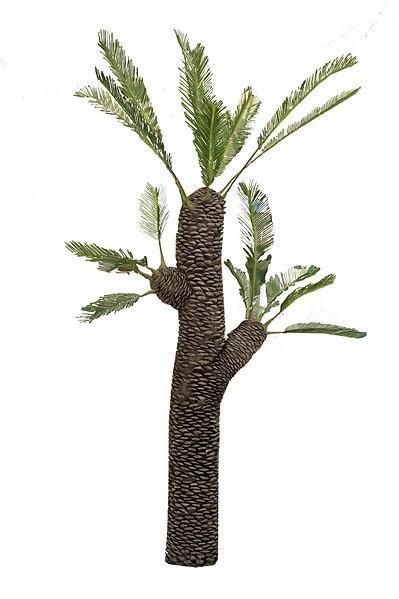 Jurássico: características, subdivisões, flora, fauna 3