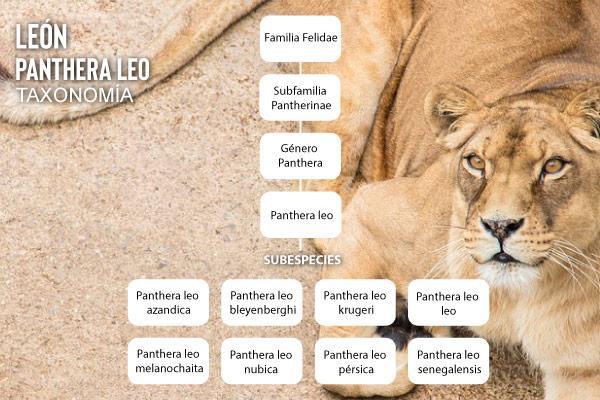 Animais consumidores: características e exemplos 9