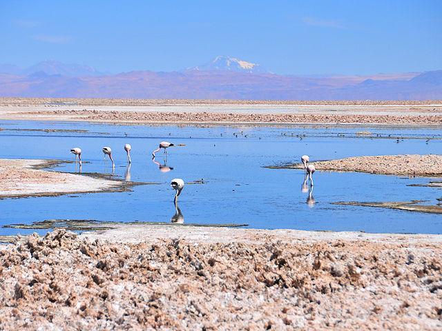 Ecossistema lêntico: características, biodiversidade e ameaças 1